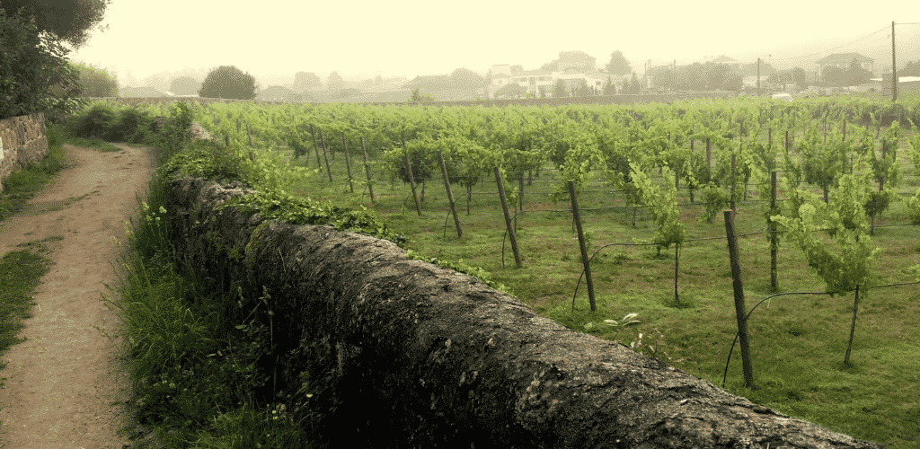 The Way of St James Winefields